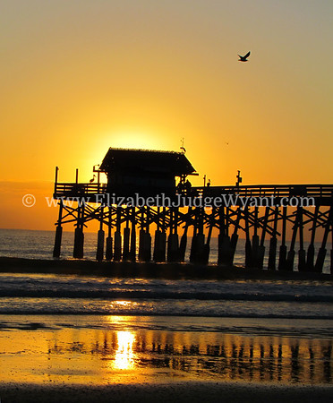 Sunrise Seagulls and Pelicans at the Pier Cocoa Beach