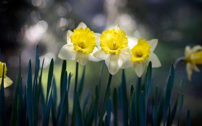 Sunriver May 2014 Flowers