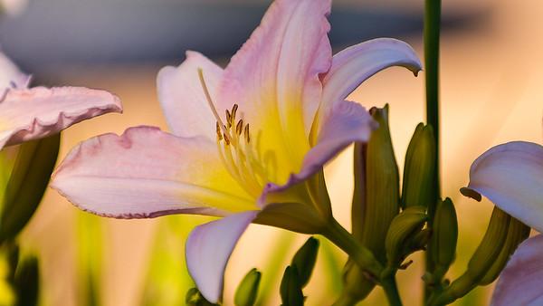 Flower by art center1