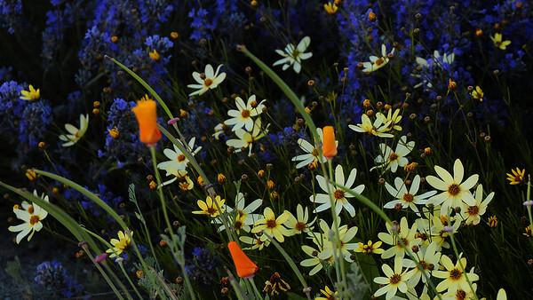 Flowers downtown Pendleton1