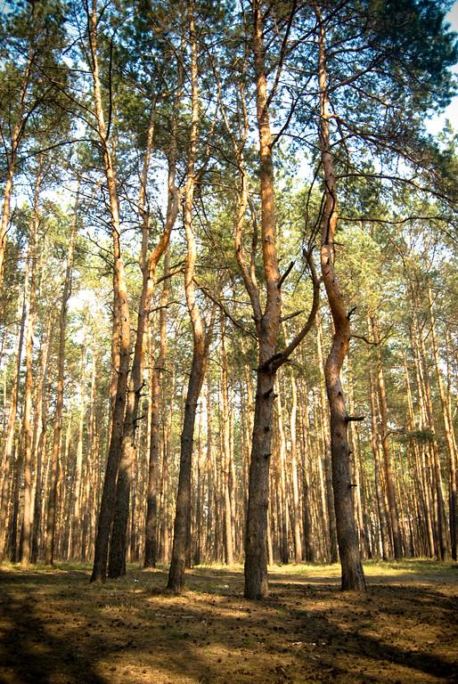 Forest near my house