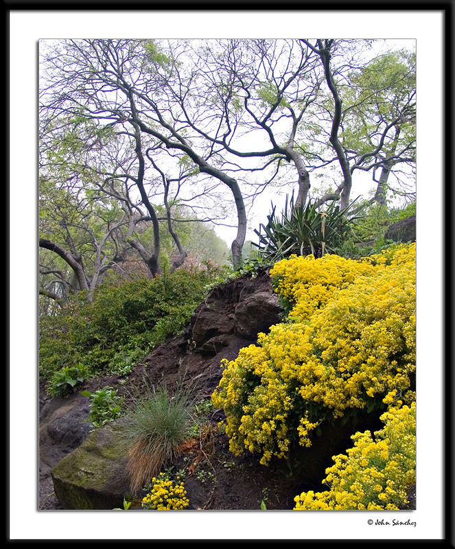 Yellow Ground Cover