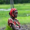 Trabalhadora da bolanha de Sambacunda -  tabanca do sector de Contubuel - região de Bafatá.