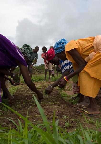 Mulheres na monda da horta comunitária de Darsalam - tabanca no sector de Pitche, região de Gabú