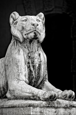 Lion at the Gate - Copyright 2016 Steve Leimberg - UnSeenImages Com File0608