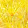 Yellow Flowers in Paris - Copyright 2016 Steve Leimberg - UnSeenImages Com _H1R0174