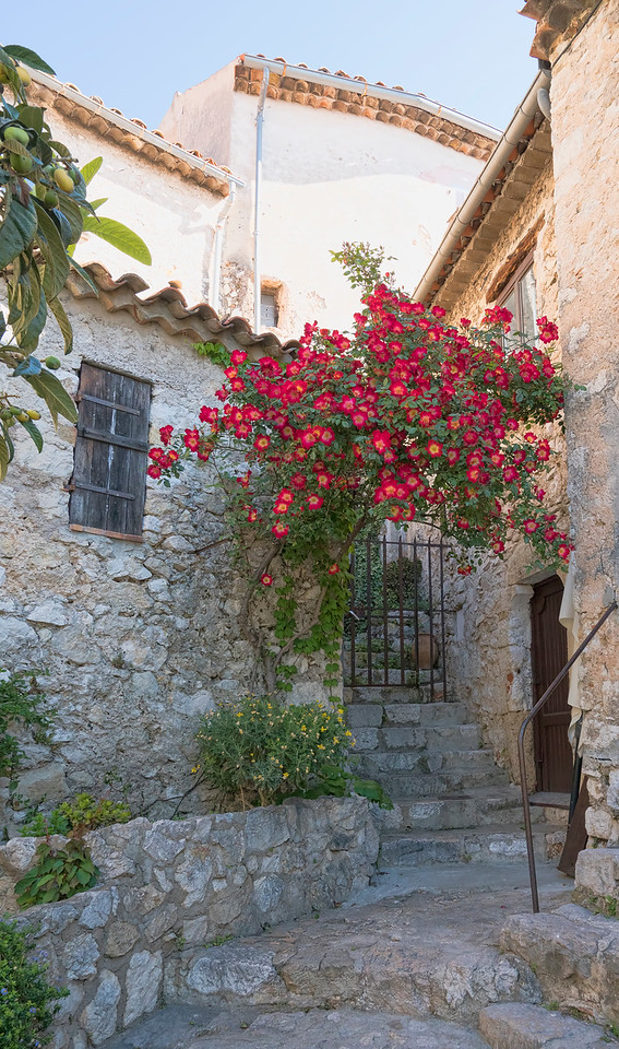 Red Roses and Old Gate