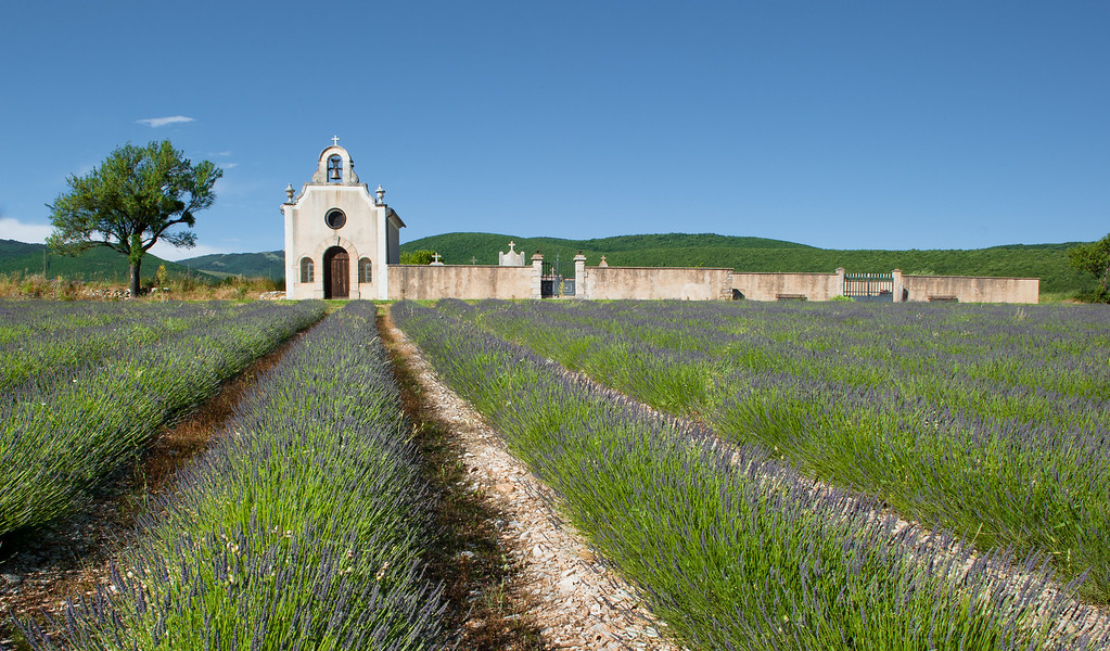 Lavender leading to small church in the Luberon region of Provence