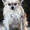 Dog Watching Tango Dancers - Copyright 2016 Steve Leimberg - UnSeenImages Com _H1R1167