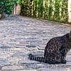 Le Chat Burglar - Copyright 2016 Steve Leimberg - UnSeenImages Com _H1R8252