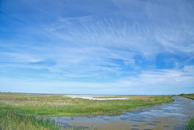 Scenery Camargue National Park, France 24 August 2014