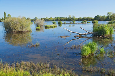 Scenery, La Brenne reserve, France 1 September 2014