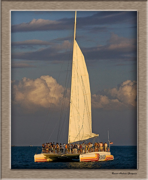 Sunsets glow on a cat of the coast of Key West, the Conch Republic.