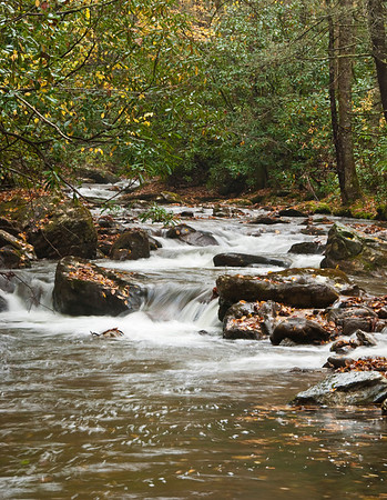 Stream in the Pisgah National Forest