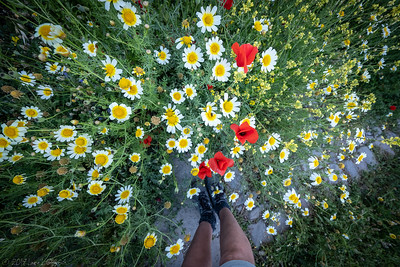 The variety of wild flowers in full bloom was a delightful surprise.