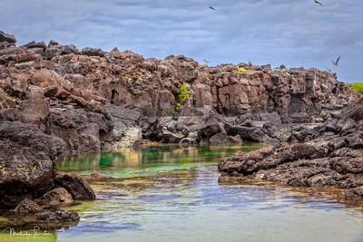 Lava Rock Tidal Pool Lagoon