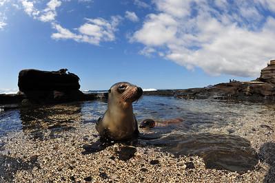St. James, Bay, Galapagos