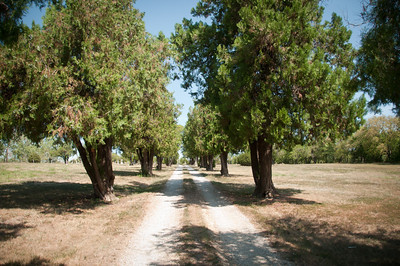 A tree-lined path guides you into the Half-Day Cemetery