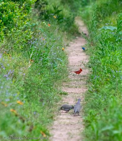 Rainbow path - Corp Woods, Galveston Island
