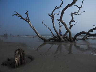 Jekyll Island - Driftwood Beach