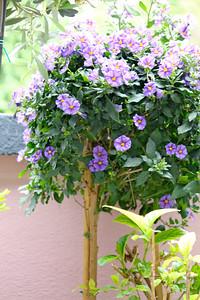 Gisela's balcony