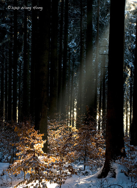 Morning sun in the woods outside Horressen near Montabaur