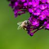 Pollen pants