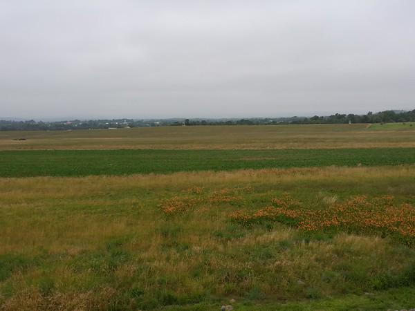 The Wheatfield (?)
