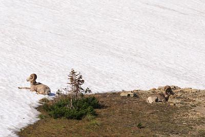 2014_07_13 Glacier National Park 022