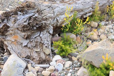2014_07_14 Glacier National Park 019