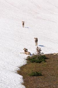 2014_07_13 Glacier National Park 036