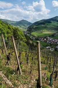Weinberge gibt es einige im Glottertal / There are some Vineyards in the Glotter-Valley
