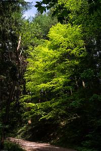 Frühlingsgrüntöne / Shades of Green in Springtime