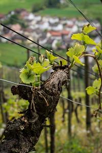 Glottertal hat auch eine kleine Winzergenossenschaft / There is a small Winemaking cooperative in the  Glottertal-Village