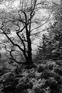 Wanderidylle beim Kandel-Aufstieg / Romantic Hiking trails around the Kandel Mountain