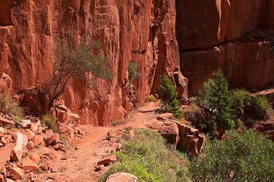 Norht Kiabab trail, Grand Canyon National Park - North Rim, Arizona