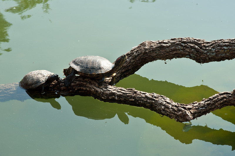 Turtles at The Oklahoma City Zoo