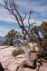 Grand Canyon-05027