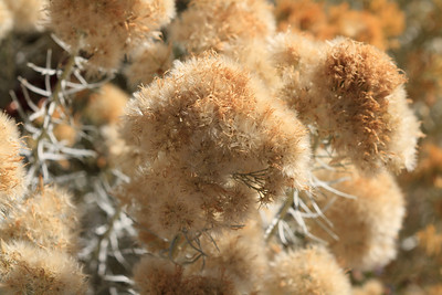 2012_10_02 Grand Canyon 083
