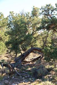 2012_10_02 Grand Canyon 156