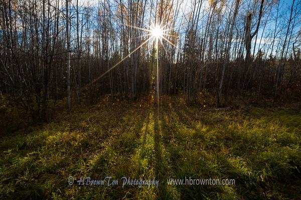 Sunrise through the poplars