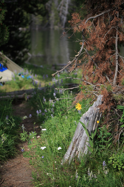 This beautiful flower and log marked the 'gateway' to our campsite. Shortly after this photo was taken, Beck saw otters frolicking in the water off in the distance.