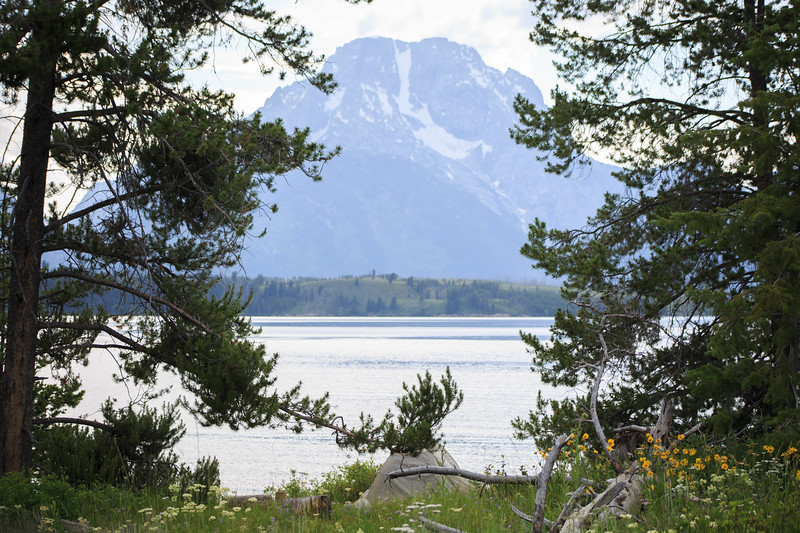 Mt Moran provides a stunning backdrop for this happy camper.