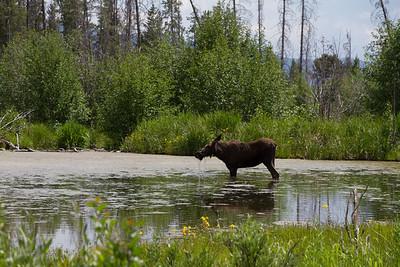 2011_07_05 Wyoming 138