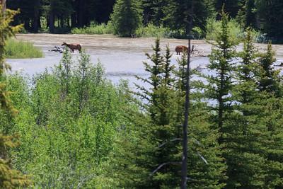2011_07_05 Wyoming 038