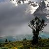 Mountain meadow,  Grand Teton National Park