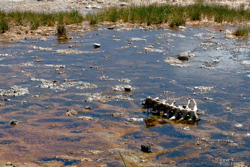 Buffalo backbone, Fairy Falls trail near Grand Prismatic Pool,  Yellowstone National Park.