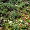 Wildflowers near Jenny Lake, Grand Teton National Park.