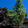 Craters of the Moon National Monument, Idaho.