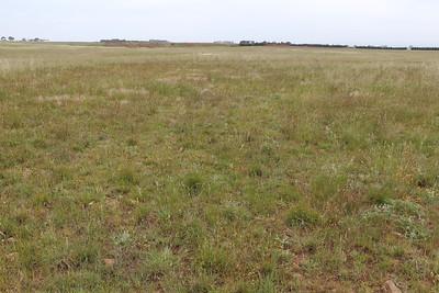 Paramount Grasslands